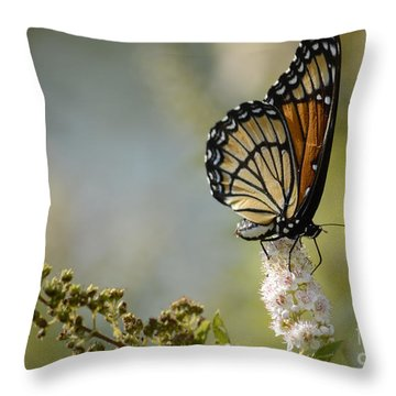 Viceroy Throw Pillow by Randy Bodkins