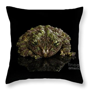 Vietnamese Mossy Frog, Theloderma Corticale Or Tonkin Bug-eyed Frog, Isolated On Black Background Throw Pillow