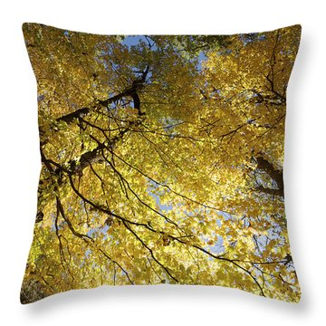 View From My Hammock Throw Pillow by Jane Eleanor Nicholas