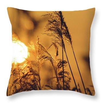 View Of Sun Setting Behind Long Grass C Throw Pillow