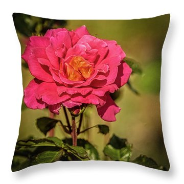 Vignetted  Rose Throw Pillow