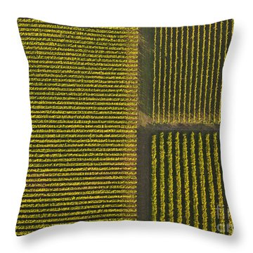 Vineyard From Above Throw Pillow