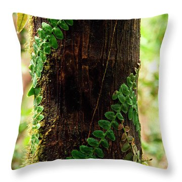 Vining Fern On Sierra Palm Tree Throw Pillow by Thomas R Fletcher