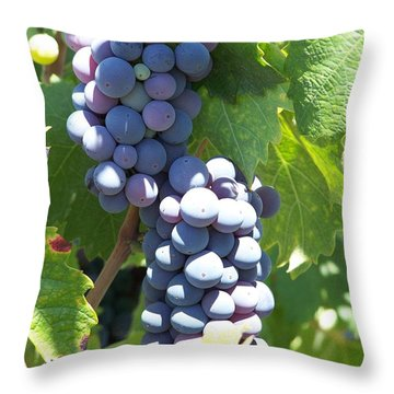 Vino On The Way Throw Pillow by Pamela Walrath