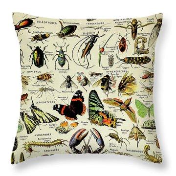 Vintage Illustration Of Various Invertebrates Throw Pillow