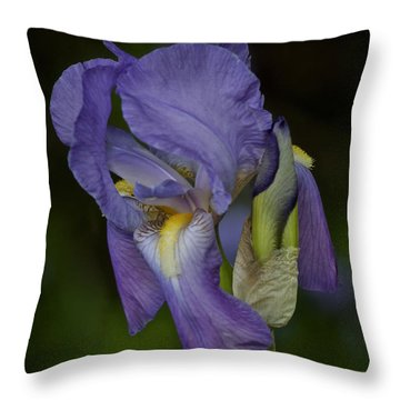 Vintage Iris May 2017 Throw Pillow by Richard Cummings