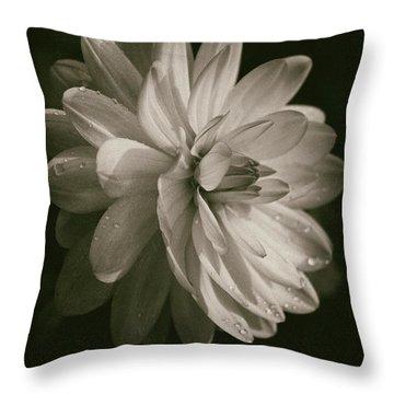 Vintage Velvet  Throw Pillow