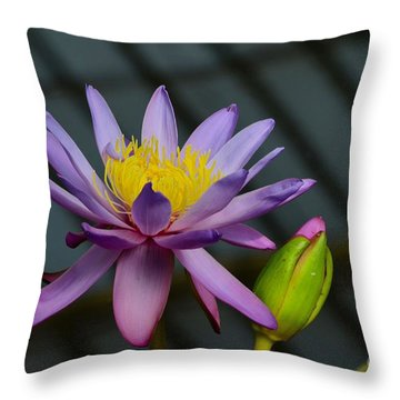 Violet And Yellow Water Lily Flower With Unopened Bud Throw Pillow
