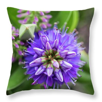 Violet Burst Throw Pillow