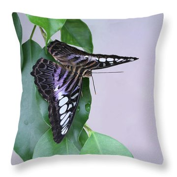 Violet Clipper Butterfly V2 Throw Pillow