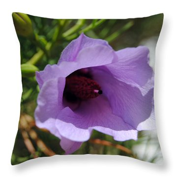 Alyogyne Hakeifolia 2 Throw Pillow