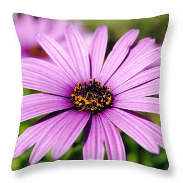 The African Daisy 1 Throw Pillow