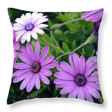 The African Daisy Flowers Throw Pillow