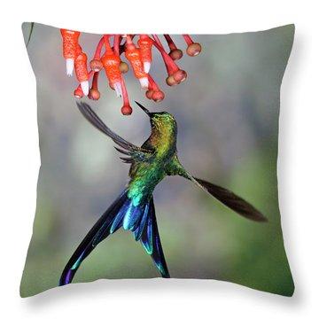 Violet-tailed Sylph Feeding Throw Pillow