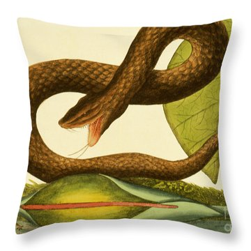 Viper Fusca Throw Pillow by Mark Catesby