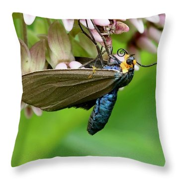 Virginia Ctenucha Moth Throw Pillow