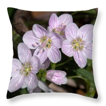 Virginia Or Narrowleaf Spring-beauty Dspf041 Throw Pillow