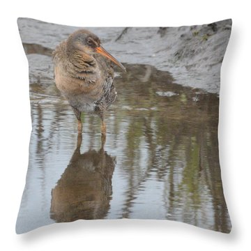 Virginia Rail Throw Pillow by Dan Williams