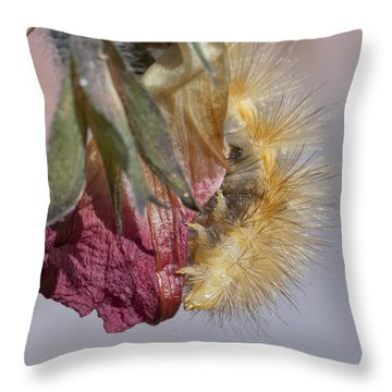 Virginian Tiger Moth 2 Throw Pillow