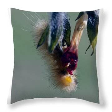 Virginia Tiger Moth 3 Throw Pillow by David Lester
