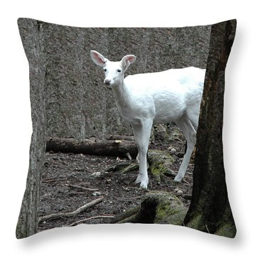 Throw Pillow featuring the photograph Vision Quest White Deer by LeeAnn McLaneGoetz McLaneGoetzStudioLLCcom