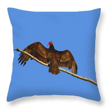 Throw Pillow featuring the photograph Vivid Vulture .png by Al Powell Photography USA