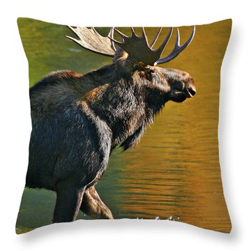 Wading Moose Throw Pillow