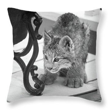 Throw Pillow featuring the photograph Wait For It by Tim Newton