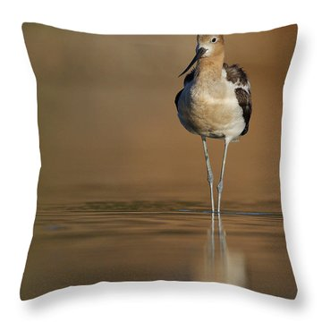 Waiting Avocet Throw Pillow