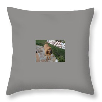 Waiting For Dinner Throw Pillow by Val Oconnor