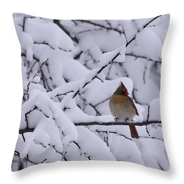 Throw Pillow featuring the photograph Waiting For Mr. C by Shari Jardina