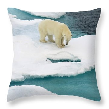 Waiting For Seal Throw Pillow