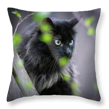 Waiting In The Wing Throw Pillow