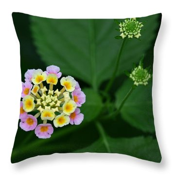 Throw Pillow featuring the photograph Waiting Their Turn by Shari Jardina