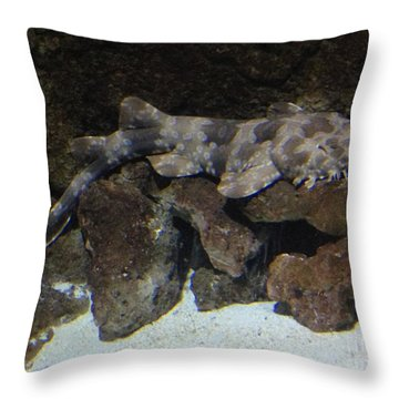 Shark Pillow That Eats You waiting to eat you - spotted wobbegong shark photographrichard