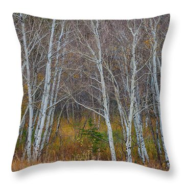 Throw Pillow featuring the photograph Walk In The Woods by James BO Insogna