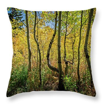 Throw Pillow featuring the photograph Walking In The Woods by Scott Read