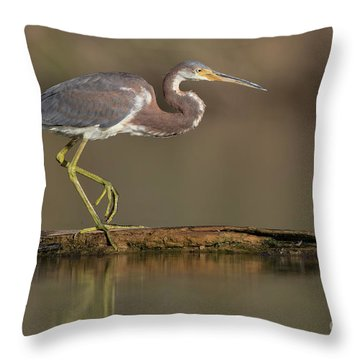 Walking Tri Colored Throw Pillow