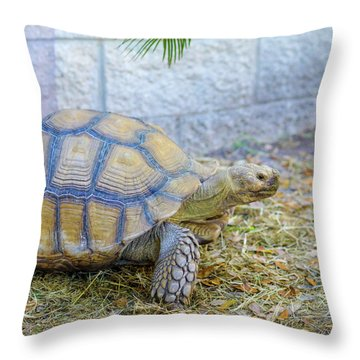 Walking Turtle Throw Pillow