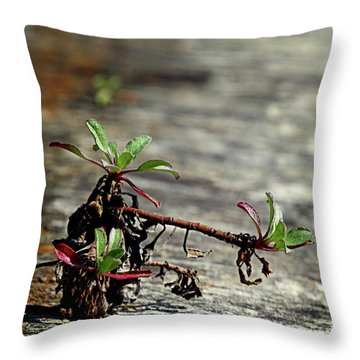 Wall Vegetation Throw Pillow