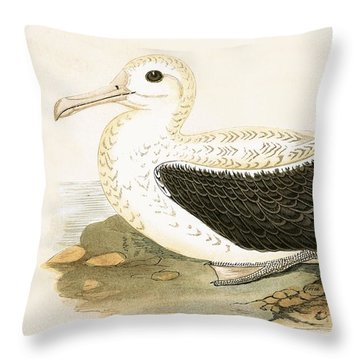 Wandering Albatross Throw Pillow by English School