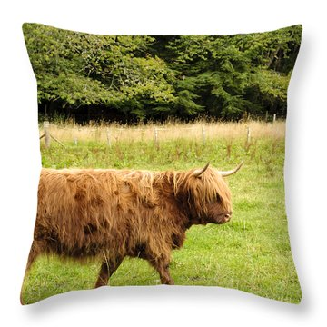 Throw Pillow featuring the photograph Wandering Coo by Christi Kraft