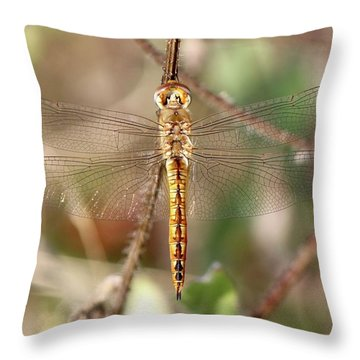 Wandering Glider Throw Pillow