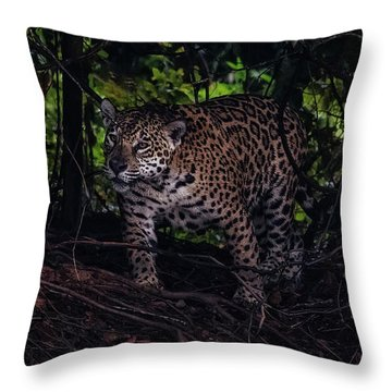 Wandering Jaguar Throw Pillow by Wade Aiken