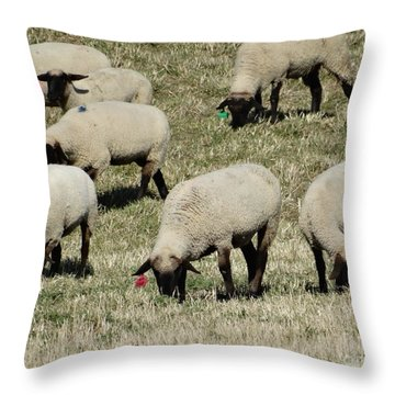 Wandering Wool Throw Pillow