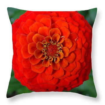 Want An Orange ? Throw Pillow