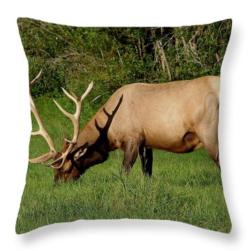 Wapiti Throw Pillow by Bruce W Krucke