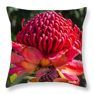 Throw Pillow featuring the photograph Waratah  by Odille Esmonde-Morgan