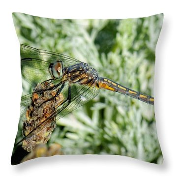Warming-up - Darner Dragonfly Throw Pillow