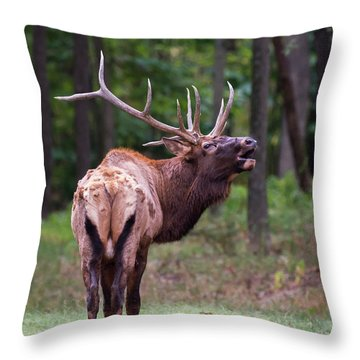 Throw Pillow featuring the photograph Warning by Andrea Silies